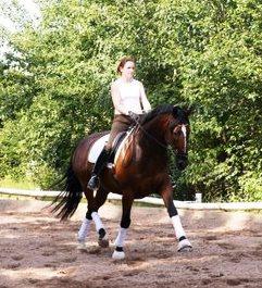 Die systematische Gymnastizierung eines Pferdes – WEBINAR