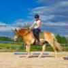 Karolin Köhler gebissloses Reiten Training